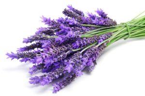 DoTerra essential oils scam lavender